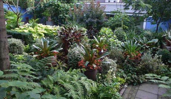 Trong vườn nhiệt đới, các loài cây có thể mọc chồng lên nhau, theo nhiều tầng và cả những loài dây leo trải rộng. Mật độ cây dày đặc là điều cần thiết để tạo ra một khu vườn nhiệt đới đẹp.