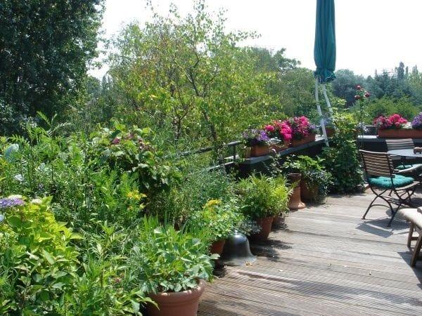 vườn đẹp 2