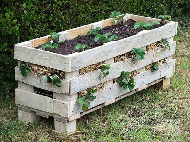 Khi tạo một chậu cây bằng gỗ pallet, có một vài phương pháp mà bạn có thể sử dụng. Như bạn có thể đặt những cây này ở khu vực trống và đặt gỗ pallet sát vào tường, đây sẽ là ý tưởng phù hợp nếu bạn muốn trồng những chậu hoa hay cây mọng nước ngoại trừ dâu tây thì bạn nên cần một chậu cây lớn hơn và chắc chắn hơn.
