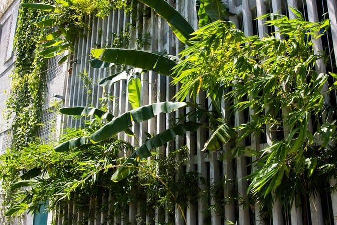 Văn phòng rợp mát trong căn nhà Đà Nẵng phủ đầy cỏ lau, tre, chuối