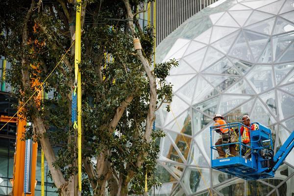 """Đi làm như đi... vào rừng, văn phòng mới của Amazon khiến nhân viên quá """"choáng váng"""" - 8"""