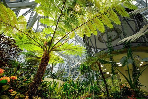 """Đi làm như đi... vào rừng, văn phòng mới của Amazon khiến nhân viên quá """"choáng váng"""" - 6"""